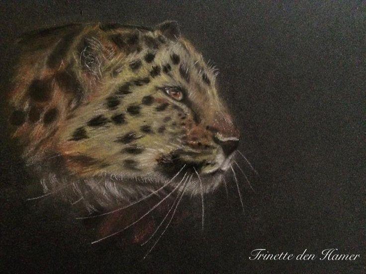 Trinette den Hamer tekent en schildert portretten vanaf foto. Op deze website ziet u haar portfolio en kunt u haar werk bewonderen.