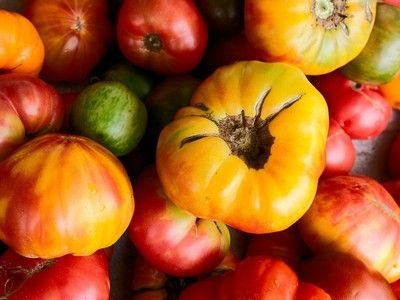 How to tell if a tomato is ripe without wrecking it