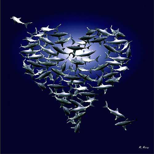hearts & sharks
