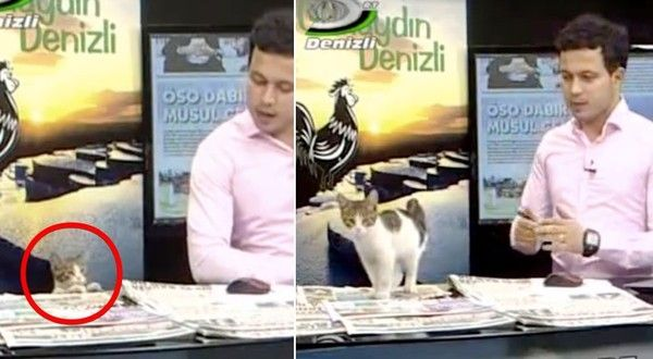 Stray Kitten Walks in Studio and Makes Surprise Appearance on Live TV