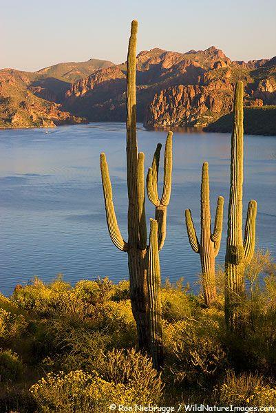 Saguaro Lake, Tonto National Forest, Arizona...HOME!