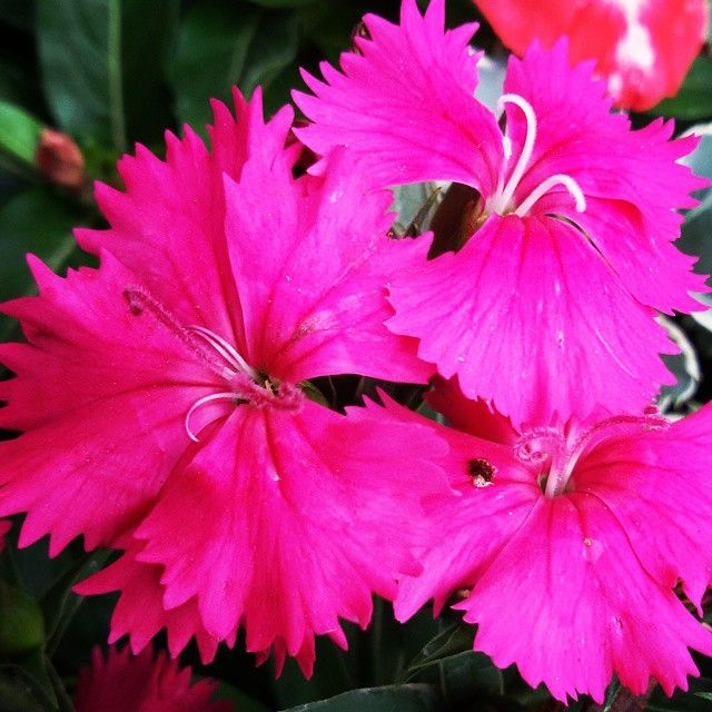 #flowers #flower #kardashian #TagsForLikes #petal #petals #nature #beautiful #love #pretty #plants #blossm #sopretty #summer #flowerstagram #flowersofinstagram #flowerstyles_gf #flowerslovers #flowerporn #botanical #floral #florals #insta_pick_blossom #fl