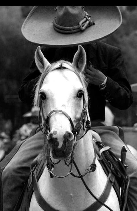 Charro con su hermoso caballo