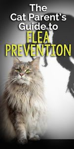 The Cat Parent's Guide to Flea Prevention