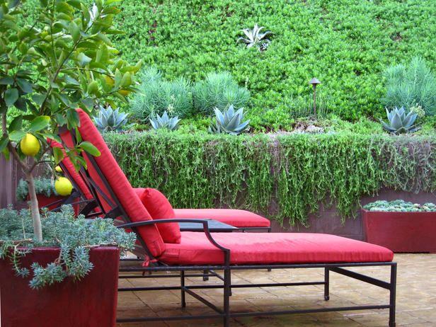 Mobília do pátio com árvores de limão