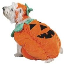 Pumkin Eater -small - 8 Dollars  HalloweenCostumesForDogs.org