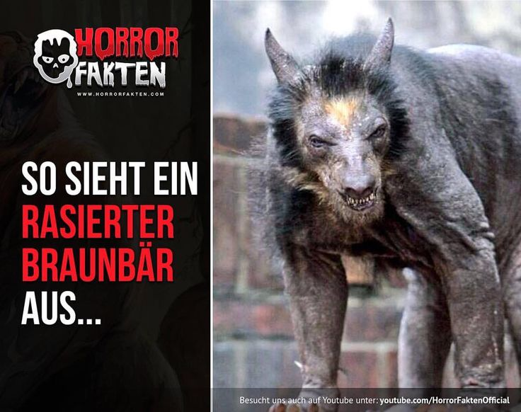❝Sieht aus wie ein Werwolf❞ LIPPENBÄR nicht Braunbär   #horrorfakten