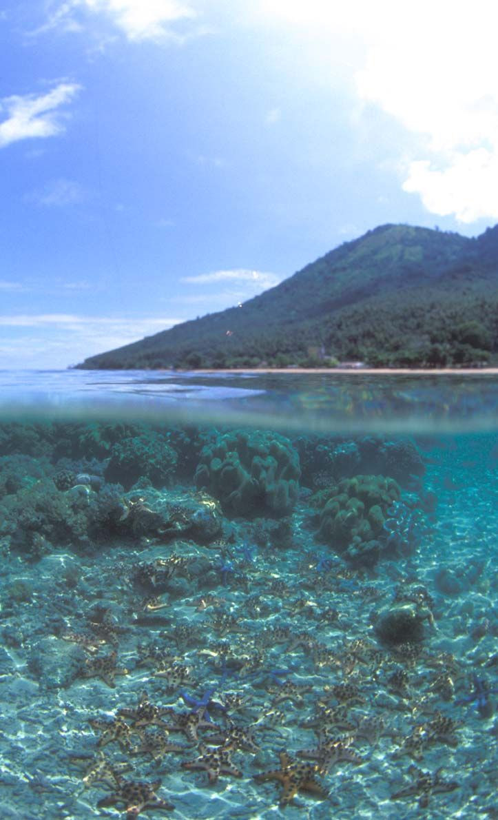 Bunaken National Marine Park - North Sulawesi, Indonesia
