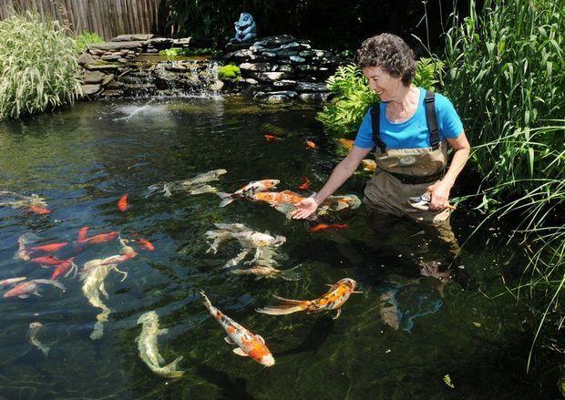 470 best fish pond ponds images on pinterest backyard for Garden pond life