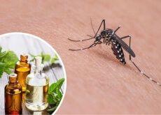 As 11 melhores ervas e especiarias para repelir os mosquitos