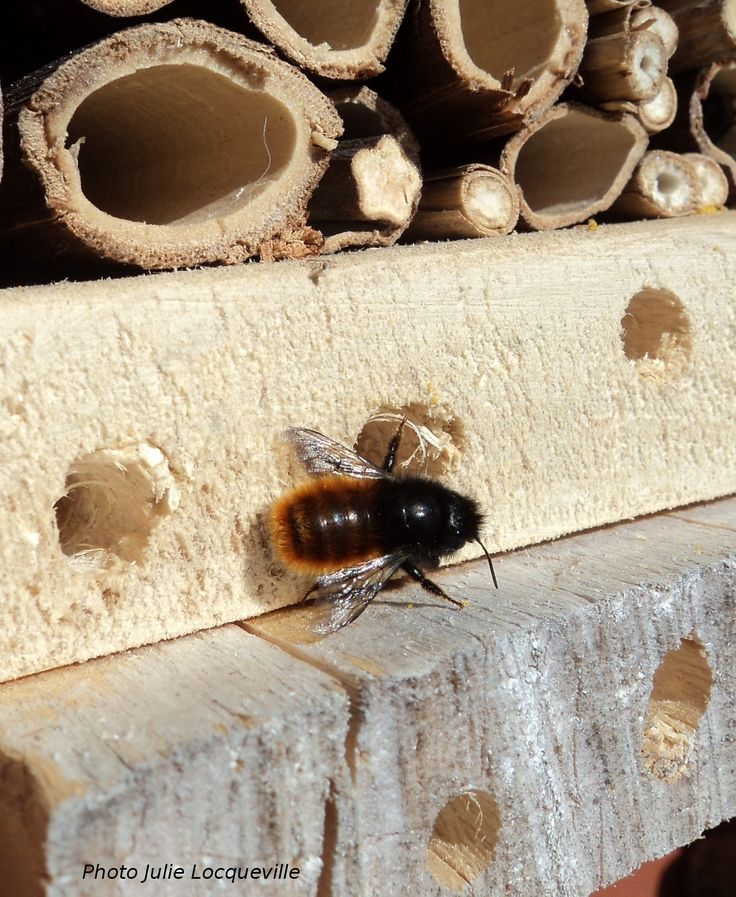 Bee on an insect hotel insect hotels pinterest for Hotel a insecte coccinelle