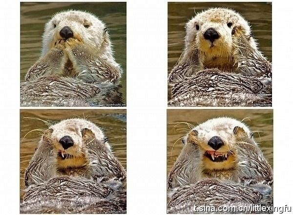 #otter: Photo