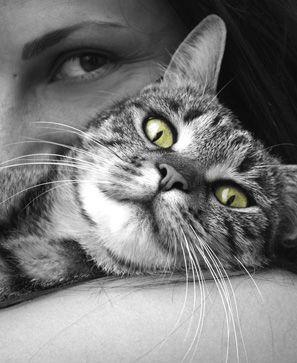 Saviez-vous que vous avez dans vos murs le meilleur des thérapeutes ? Votre chat ! Minet, confortablement installé sur le divan, a le pouvoir d'apaiser, de soigner vos insomnies ou vos blessures, de chasser, en plus des souris, vos idées noires.