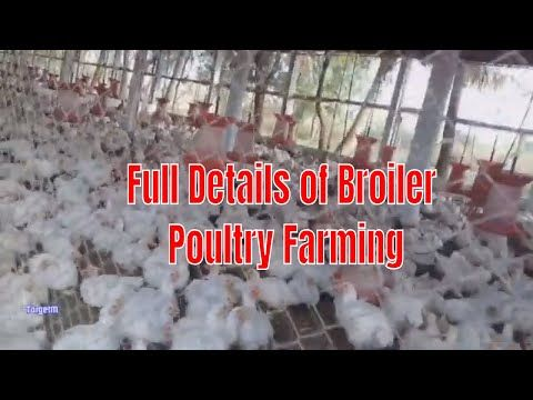 How to Start Broiler Poultry Farm / Low Investment High