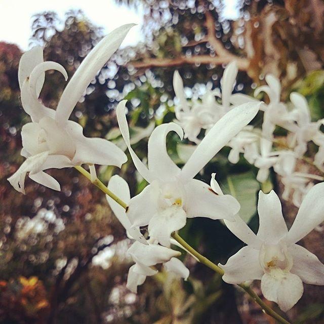 Sore ini #flowers #xperiaz1