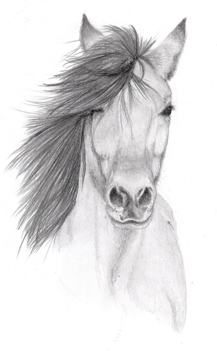 Pencil Sketches of Animals | horse pencil sketch by vulpes corsac traditional art drawings animals ...