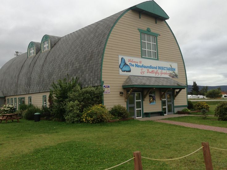 Great spot for kids! Newfoundland Insectarium in Deer Lake!