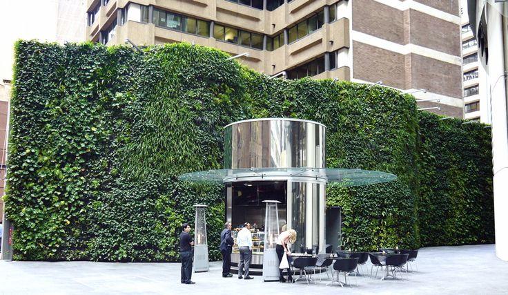 External green wall, Bligh St, Sydney