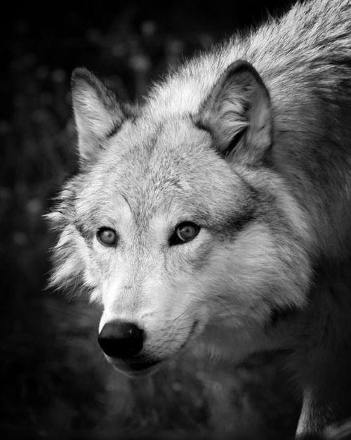 Oki Ni Kso Ko Wa. Means hello all my relatives. In Blackfeet,