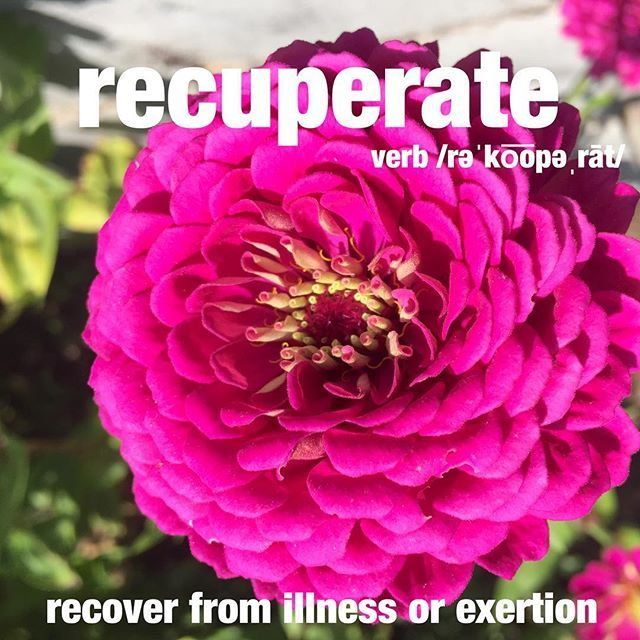 He knew that being surrounded by his favorite flowers would help him recuperate faster. #flowers #healing #recuperate #wordoftheday #dictionary