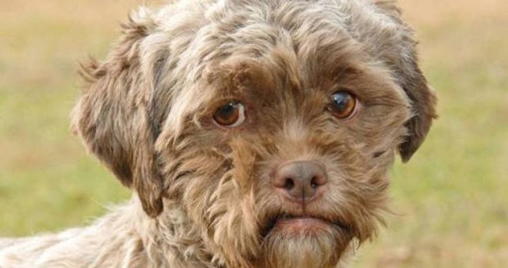 These Dogs Acting Like Humans Are Too Adorable For Words via www.bored.com