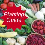 A wealth of information & tips on growing different types of veggies & fruits
