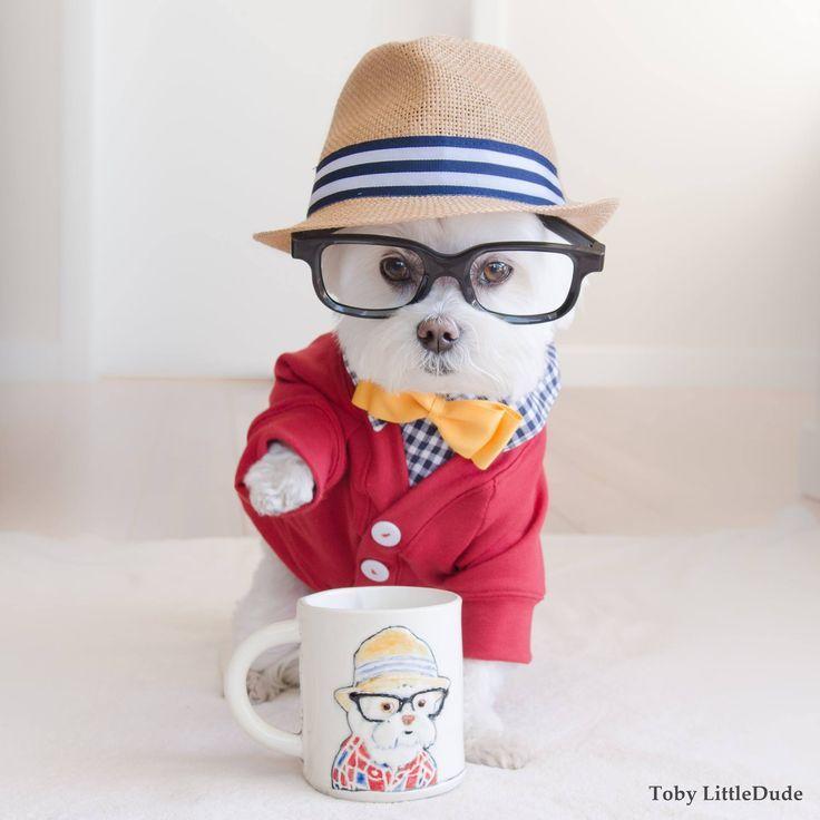 Maltese showing off his new designer mug