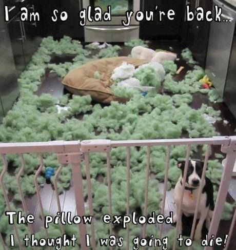 The pillow exploded If you love dogs, check out http://thedogbreedsbible.com/