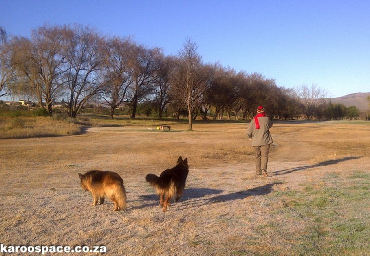 The Cradock golf course is just like Hyde Park in London - through the winter lens.