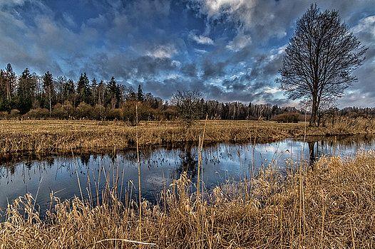 Bialowieza National Park by Katarzyna Szymanska