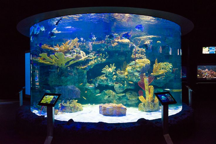 Houston Zoo Zipp Aquarium experience powered by Elo touchscreens