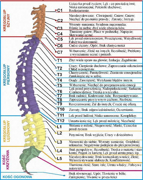 … co mówią dolegliwości kręgosłupa … | Medycyna naturalna, nasze zdrowie, fizyczność i duchowość