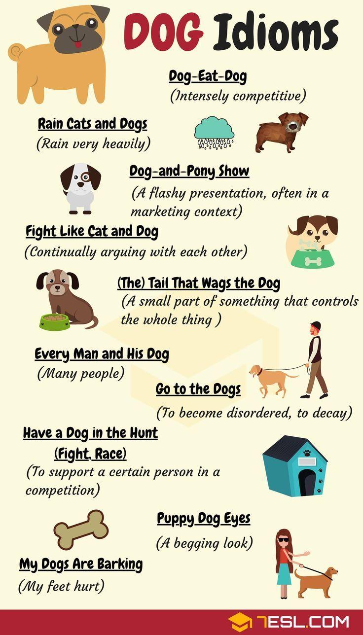 DOG Idioms: 16 Useful DOG Idioms and Sayings   English - Idioms and