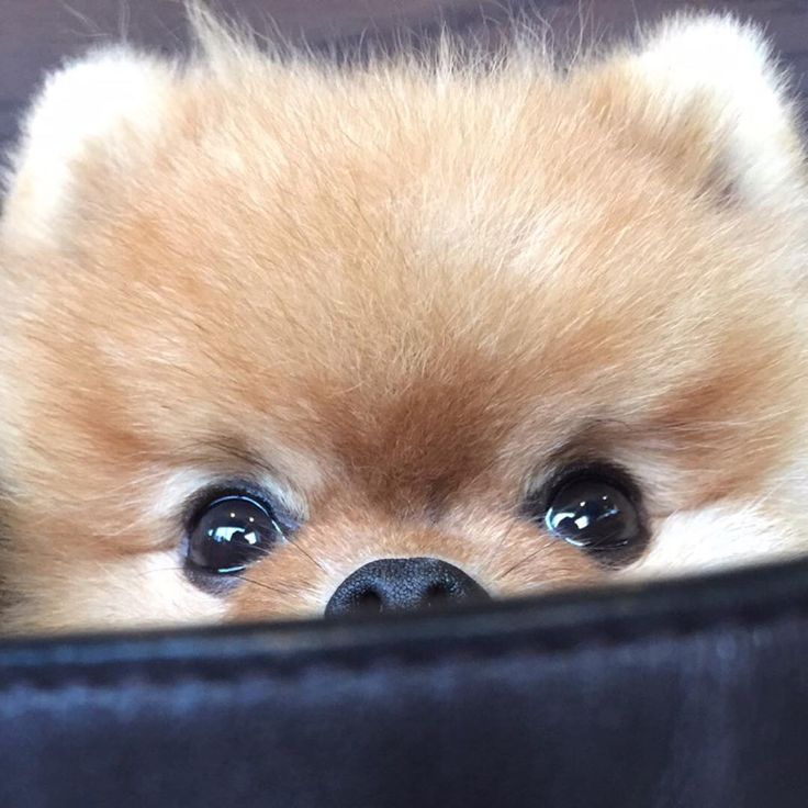"94.7k Likes, 1,309 Comments - jiffpom (@jiffpom) on Instagram: ""jiff"""