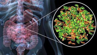 Bactérias intestinais podem prever risco de infecções graves após quimioterapia  Acredita-se que as bactérias entram na corrente sanguínea através de lesões intestinais, devido à inflamação induzida pela quimioterapia na membrana que reveste o trato digestivo. Após a infecção ter início, o próprio sistema imunológico dos pacientes é eliminado e frequentemente ficam incapazes de combater agentes patogênicos e os antibióticos frequentemente não funcionam