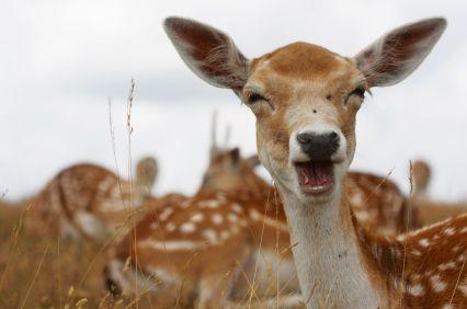 """Dear Deer.  :)    Homographs (big category) Subcategory- HOMO (""""same"""") + PHONE (""""sound"""") Subcategory- HOMO (""""same"""") + GRAPH (""""writing"""")"""