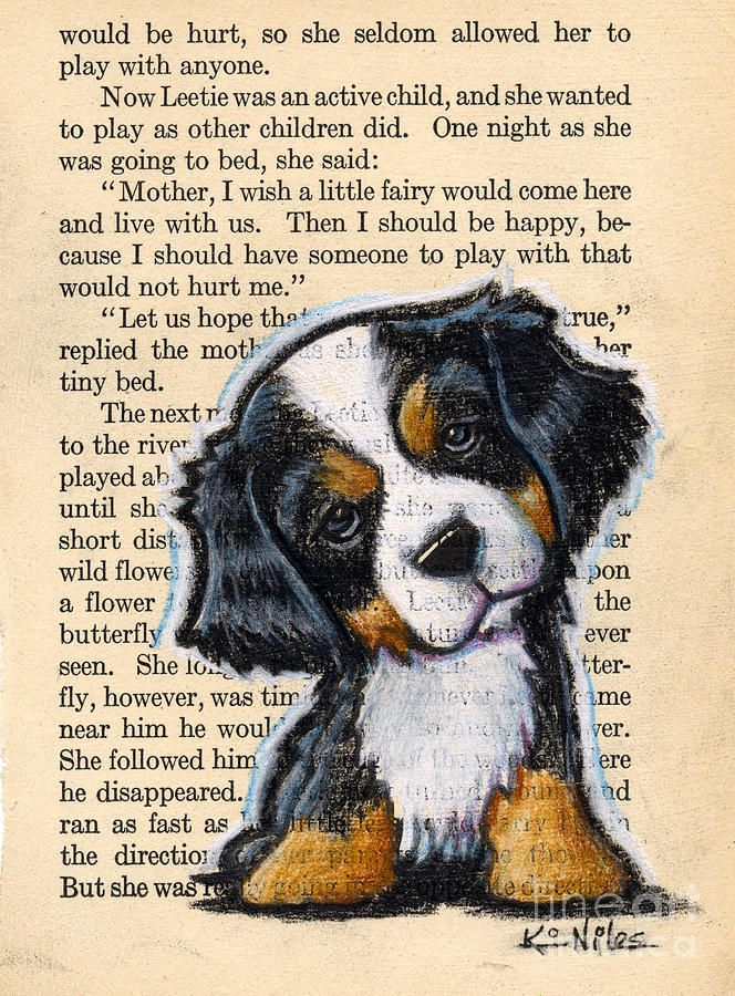 Title:  Bernese Mountain Dog Puppy  Artist:  Kim Niles  Medium:  Drawing - Color Pencils On Vintage Book Page