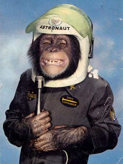 : Astronaut Chimpanzee, Spaces, Animals, Monkey Business, Chimpanzee Named, Funny, Him