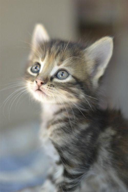 Sweetness cute kitty.