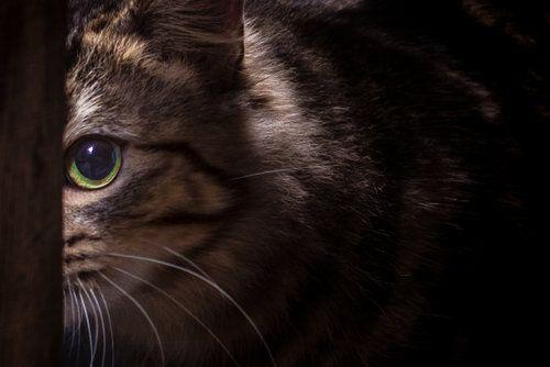 Paul Tadday Photography Melbourne Pet Portraits Dog Amp Cat Photos Pet Photographer Animal Photography Pet Portraits