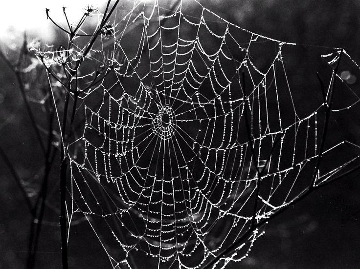 web and dew | antonio biagiotti fotografo