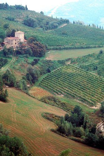 The wineyards of Brisighella, Italy