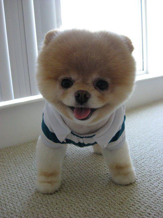 Small doggie similar to a teddy bear