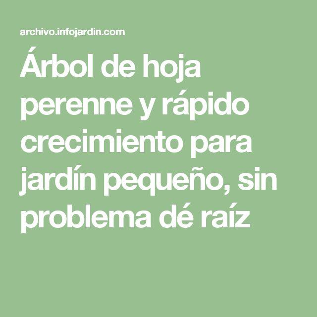 M s de 25 ideas incre bles sobre de hoja perenne en for Arboles perennes de crecimiento rapido en argentina