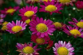 Love these colorful daisies