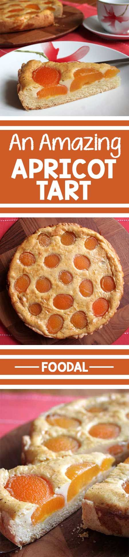 A beautiful, tasty apricot tart from Germany with a butter crust and a vanilla custard filling. It's so simple to make, you just have to try it at home! Read more and get the recipe now: http://foodal.com/recipes/desserts/moms-best-apricot-tart/