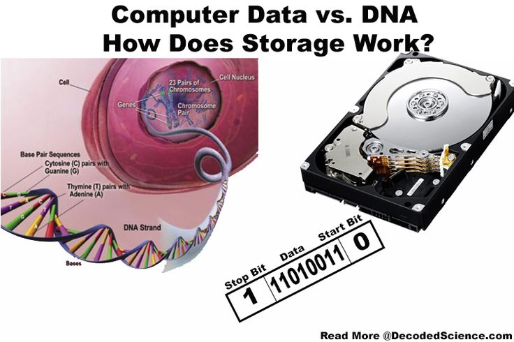 Does DNA store information in the same way that a computer stores data? Let's compare the data storage in computers with the genetic code.