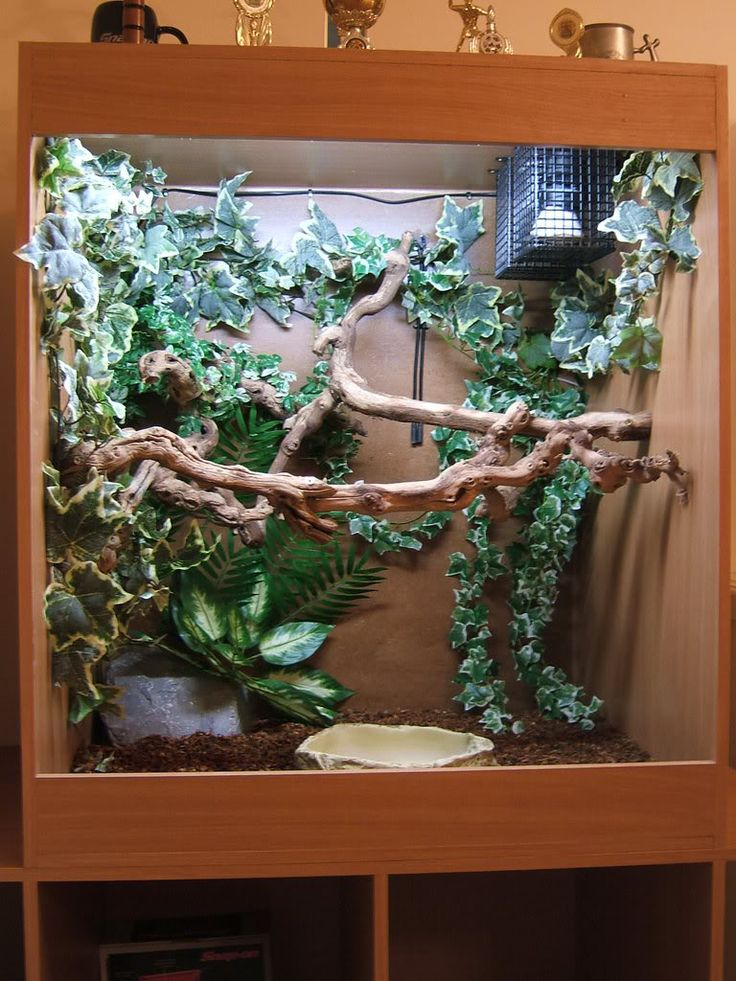 Amazon Tree Boa Enclosure Website Www As Exotics Co Uk