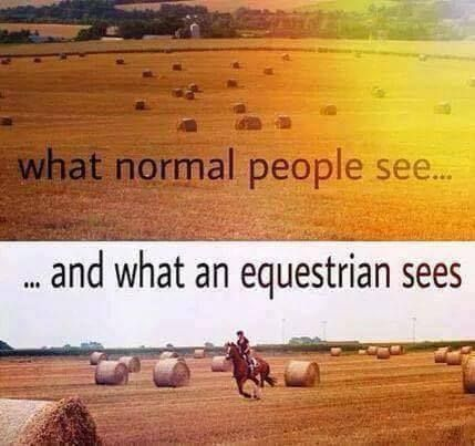 Normal people vs equestrians. Yes, every time, when I see hyafield, I imagine, it would be beatufil, if I rode on the horse here.