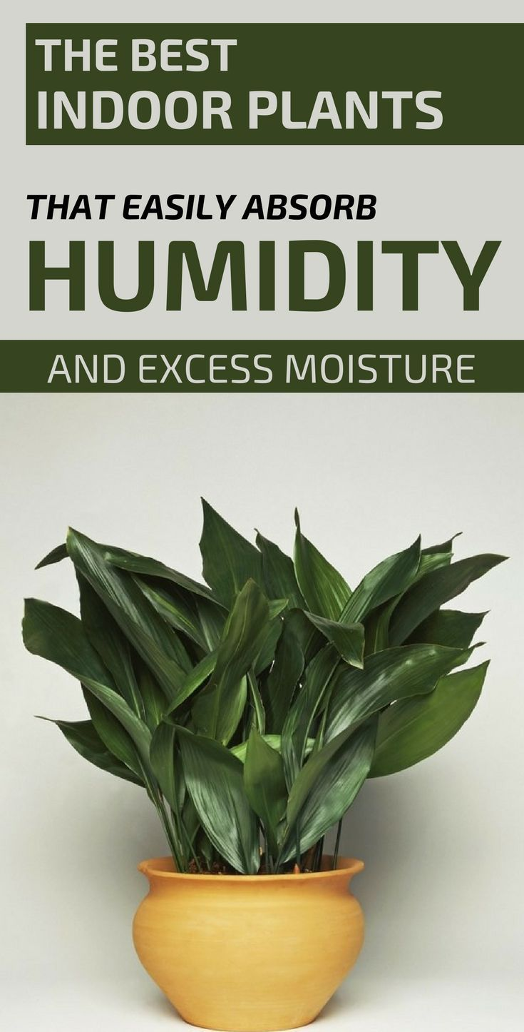 The Best Indoor Plants That Easily Absorb Humidity And Excess